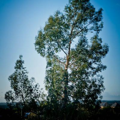L'arbre mascotte