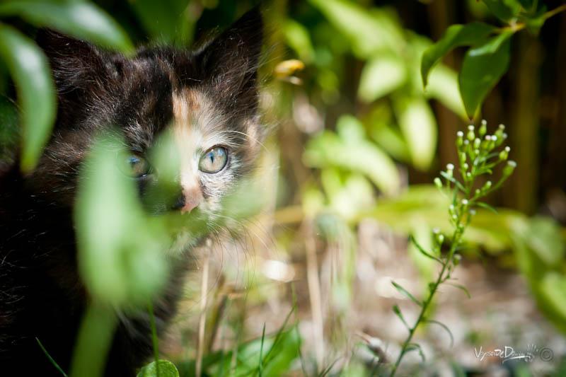 Lyly observe