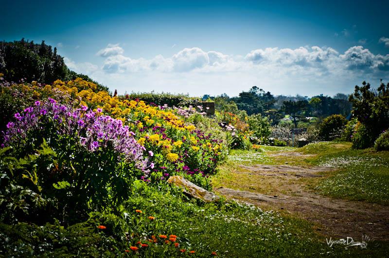 Bréhat - sentier fleurie de l'île