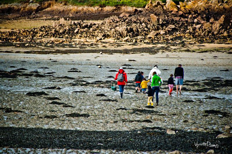 Bréhat - pêcheur à marée basse